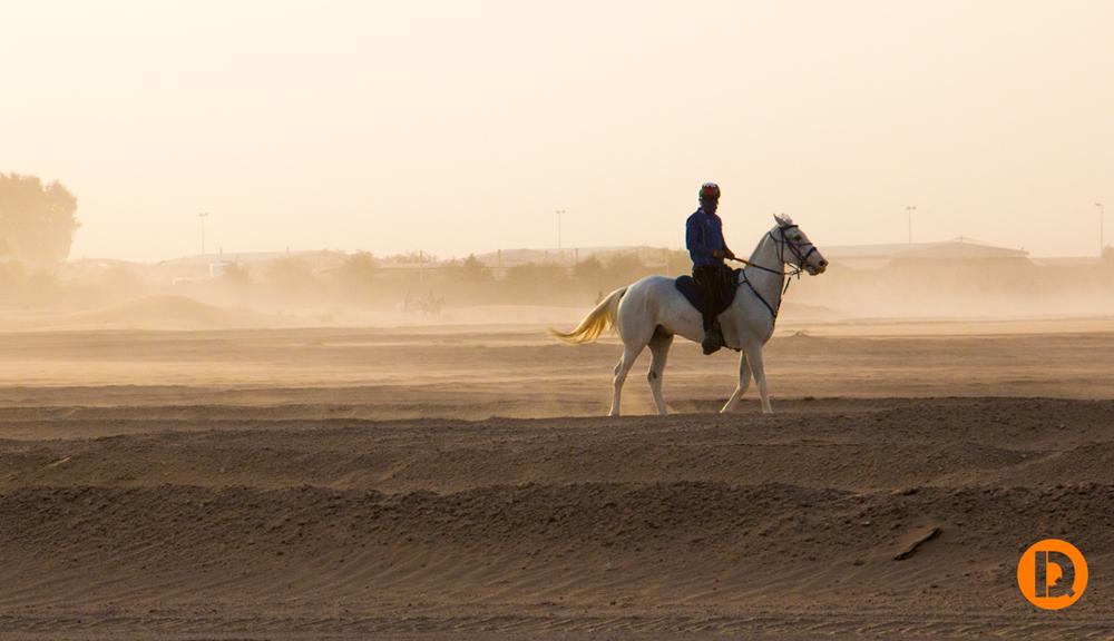 Desert-Knight 1050