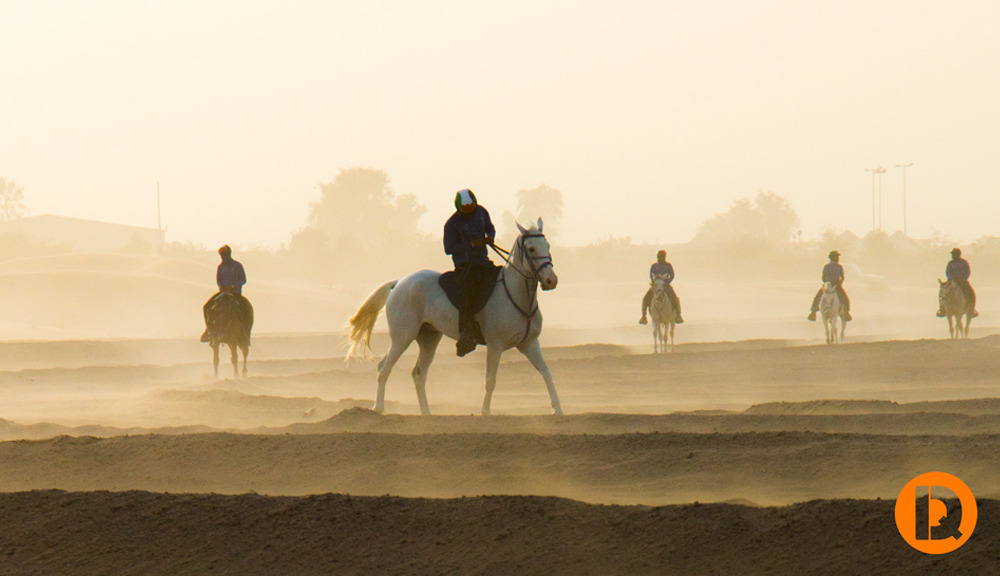Desert-Knights 1050